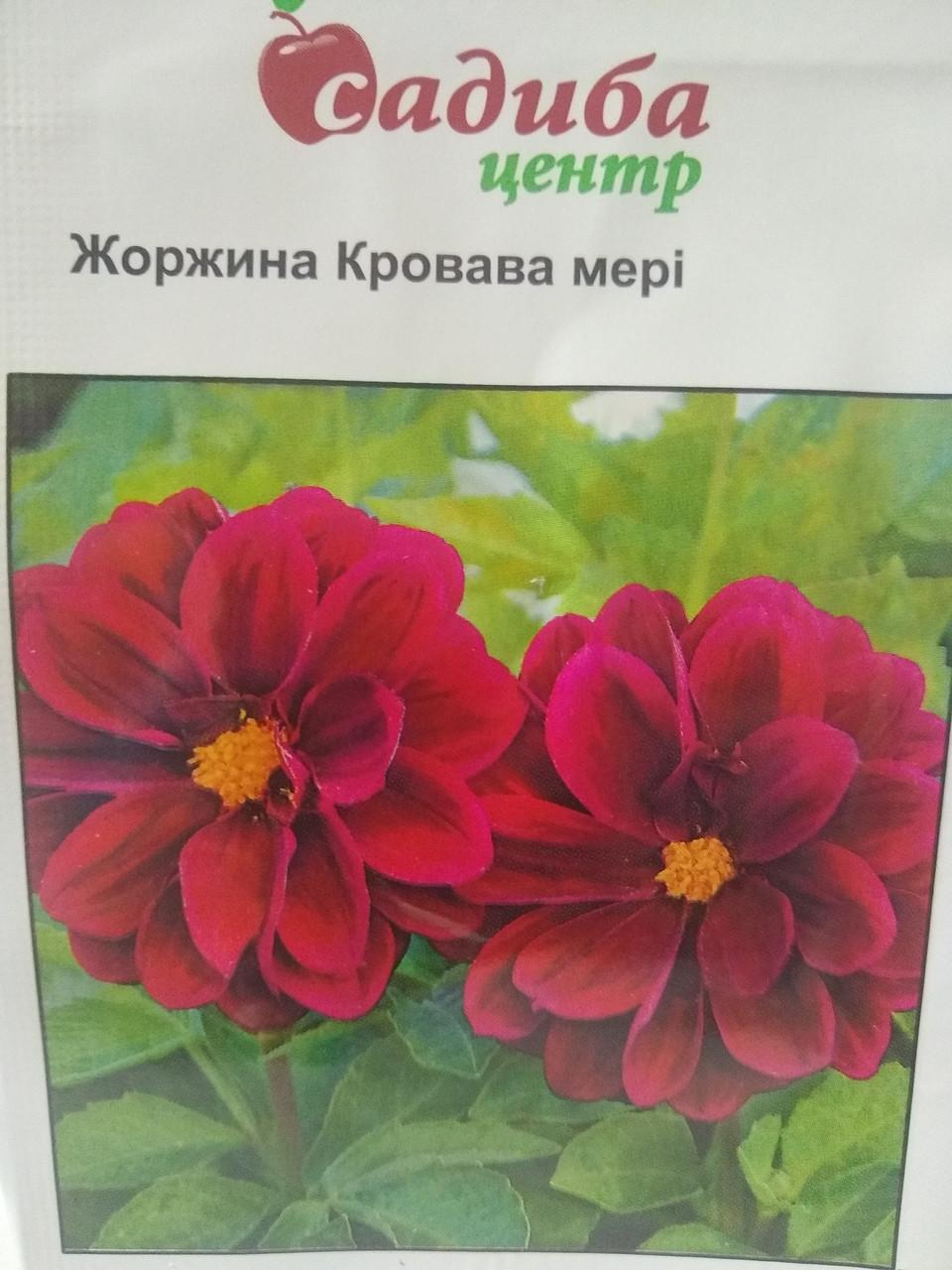 Насіння Жоржини однорічної компактної Кривава мері махрова червона 0,1 грам насіння Садиба центр Україна