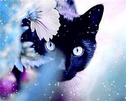 Картина по номерам 40х50 см DIY Чёрный кот (NX 9249)
