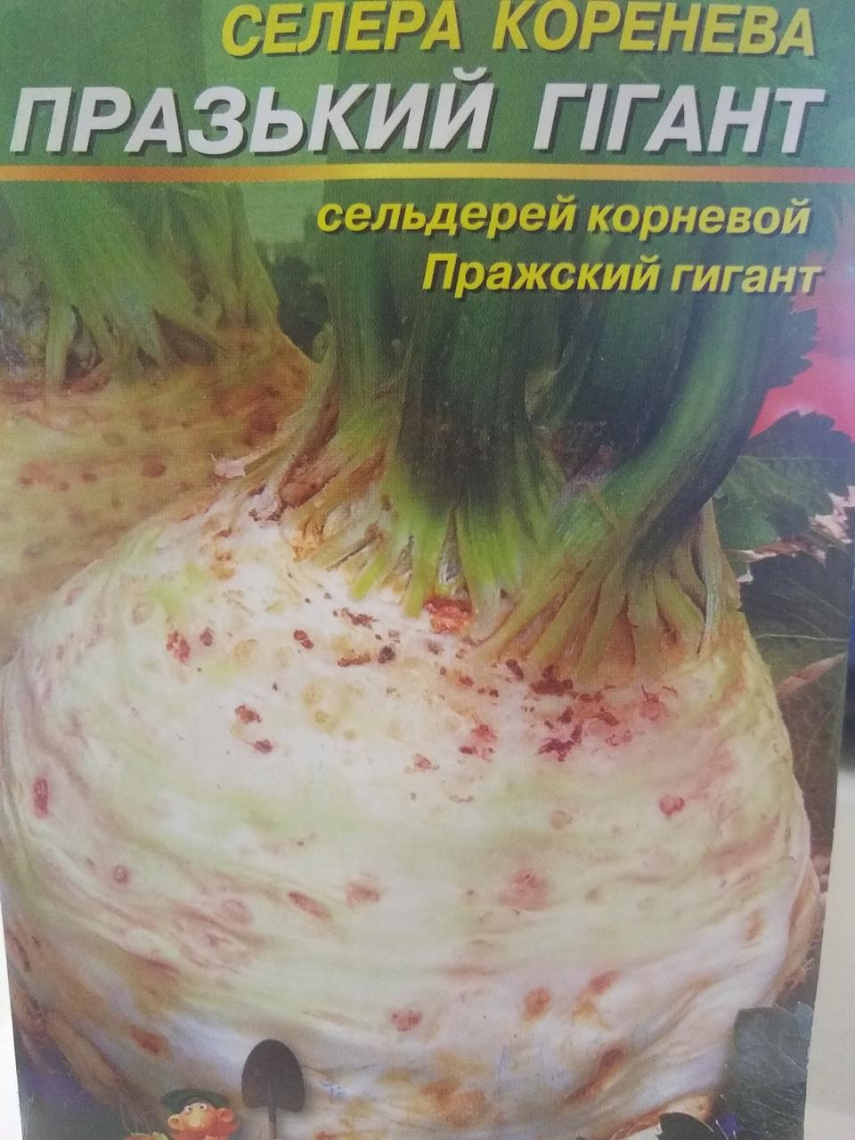 Насіння селери кореневої Празький гігант сорт середньоранній 5 грам насіння Україна