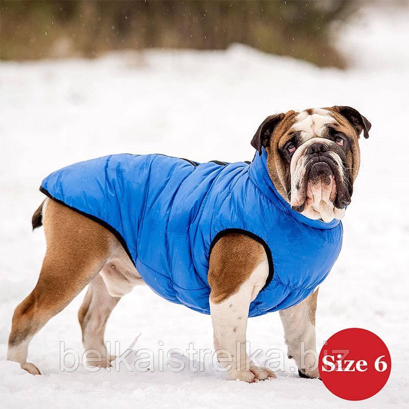 Жилет для собаки утепленный DIEGO sport  6/5 голубой, размер 6