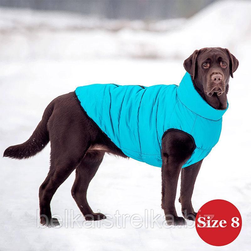 Жилет для собаки утепленный DIEGO sport  8/5 голубой, размер 8