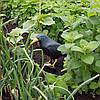 Ворон для відлякування птахів Springos GA0131, фото 2