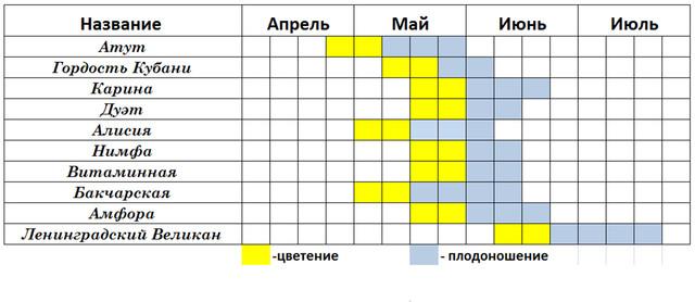 жимолость, таблица созревания сортов, купить саженцы жимолости, жимолость съедобная, жимолость сроки созревания