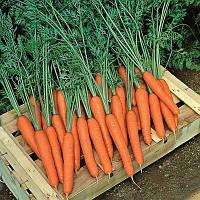 Семена моркови Престо F1 / Presto F1, 25 000 семян