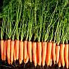 Семена моркови Волкано F1 / Volcano F1, 100 000 семян