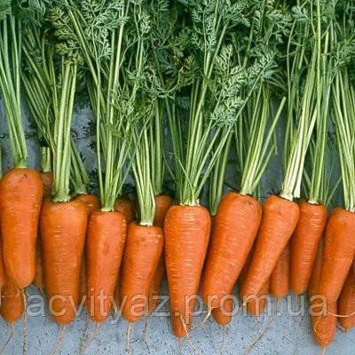 Семена моркови Ред Коред / Red Kored, 0,5 кг