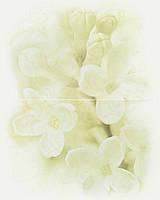 Панно Cersanit Andrea 50x40 цветок (02006)