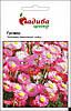 Насіння  Геліптерум розеум Гулівер, суміш,  0,1 г. Hем Zaden, Нідерланди