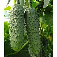 Амур F1 насіння огірка (Bejo).