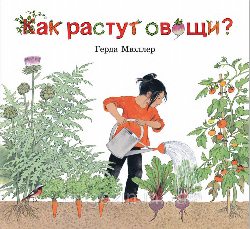 Книга Герды Мюллер Как растут овощи? Детям от 3 лет