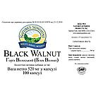 Black Walnut NSP, Грецкий черный орех, НСП, США. Противоглистный, антипаразитарный., фото 3