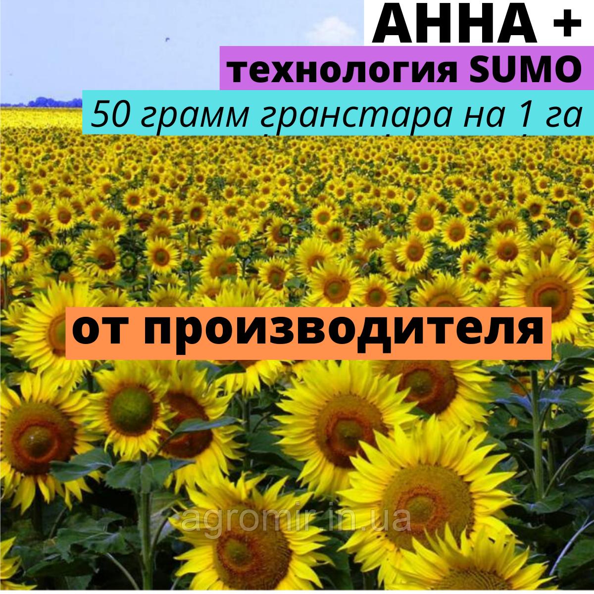 Семена подсолнечника Анна + от АФ НПП АГРОМИР