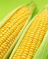 Семена-Кукуруза Спирит (Syngenta, Голландия)10шт