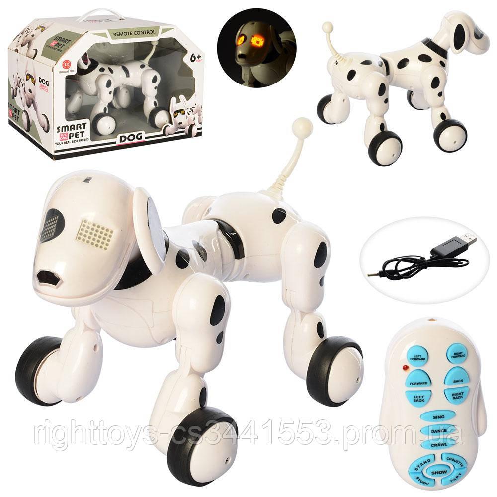 Собака 6013-3 (6шт) р/у,аккум,23см, муз,звук,свет,ездит,танцует,USBзар,в кор-ке,36-25,5-23см