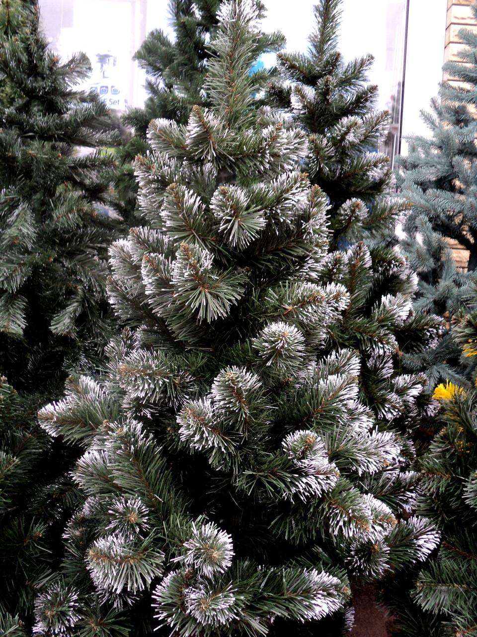 """Искусственная елка 2,3 метра """"кончик в снегу"""" ПВХ-Италия на подставке"""