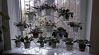 Подставка для цветов на подоконник на 29 чаш Глоксиния-2