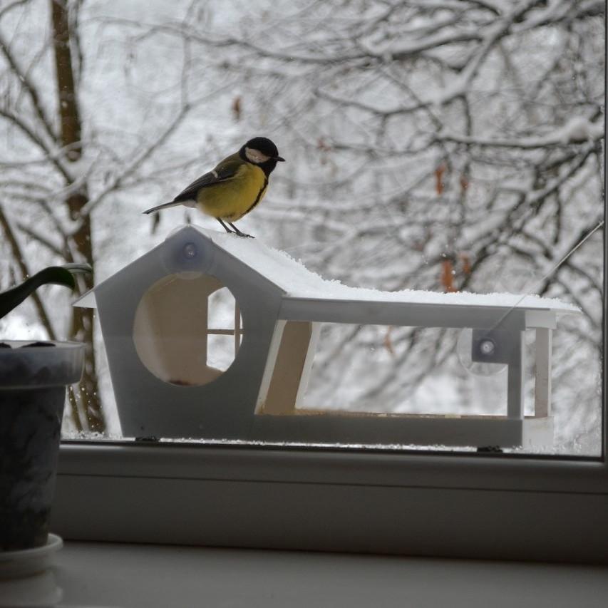 Кормушка для птиц с присосками на окно Белая
