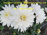 Мультифлора  белая крупная МАРМЕЛАДА, фото 2