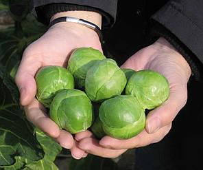 Семена капусты брюссельской Франклин F1, 15 семян — ранняя (130 дней), Bejo, фото 2