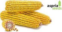 Семена кукурузы AS33034