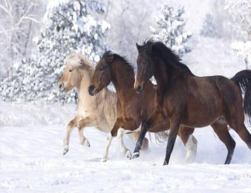 Картина за номерами 40х50 см DIY Трійка коней (NX 9278)