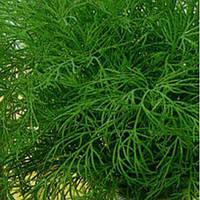 Мамонт насіння кропу (Satimex)