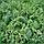 Крізбі F1 насіння кавуна ультрараннього (Nunhems) 8 шт, фото 3