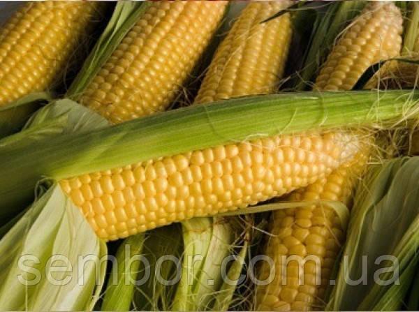 Кукуруза посевная гибрид AS 33002