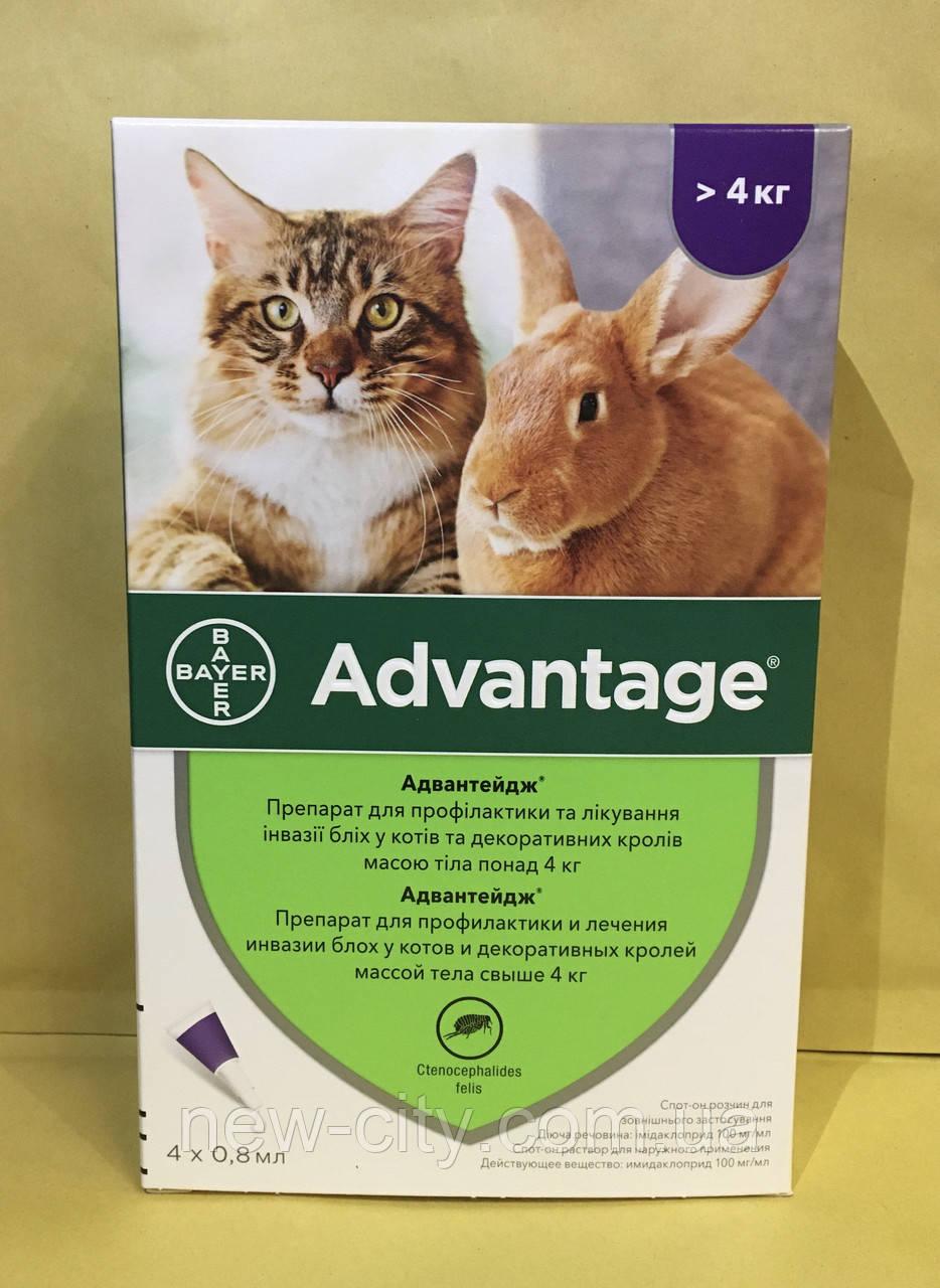 Bayer Advantage* Cat 80 - капли Байер Адвантейдж 4-8 кг от блох для кошек и декоративных кроликов за 1 пипетку