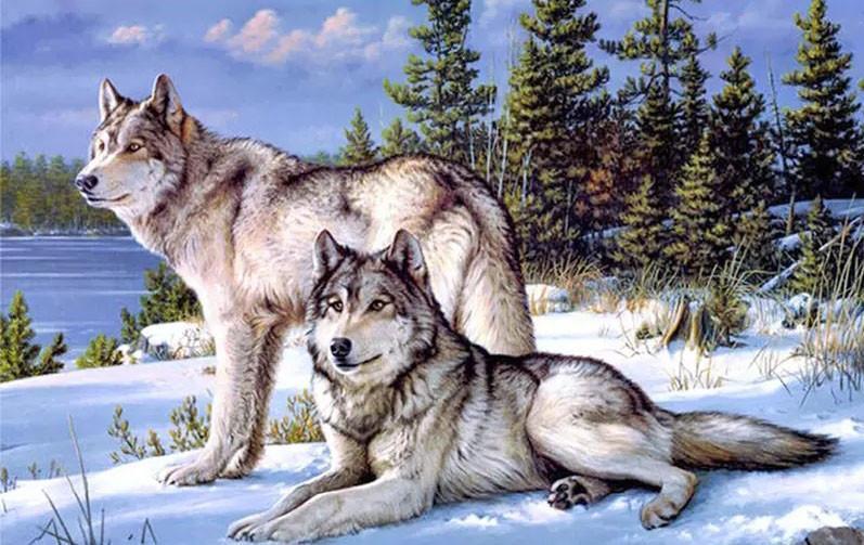 Алмазная мозаика Пара волков DM-276 60х40см Полная зашивка. Набор алмазной вышивки