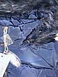 Куртки зимние на девочек оптом, Nature, 10-16 рр, фото 2