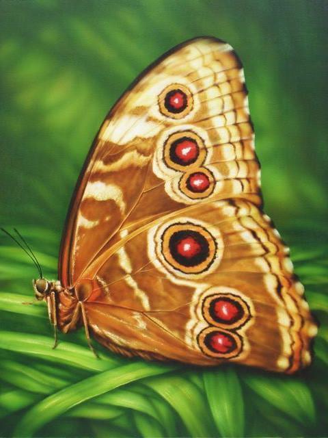 Алмазная мозаика Бабочка монарх 30x40см DM-176 Полная зашивка. Набор алмазной вышивки