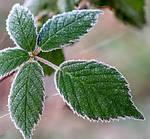 Рекомендации для защиты растений в морозную зиму без снега