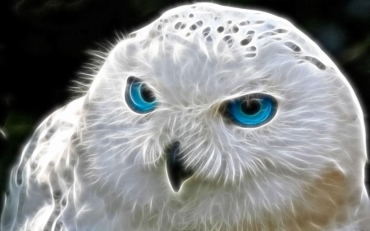 Алмазная мозаика Белая сова DM-242 40х25см Полная зашивка. Набор алмазной вышивки