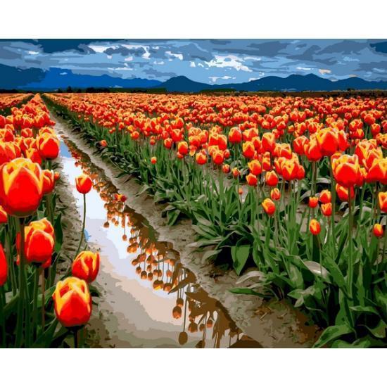 Картина рисование по номерам Babylon Море тюльпанов 40х50см VP1164 набор для росписи, краски, кисти, холст