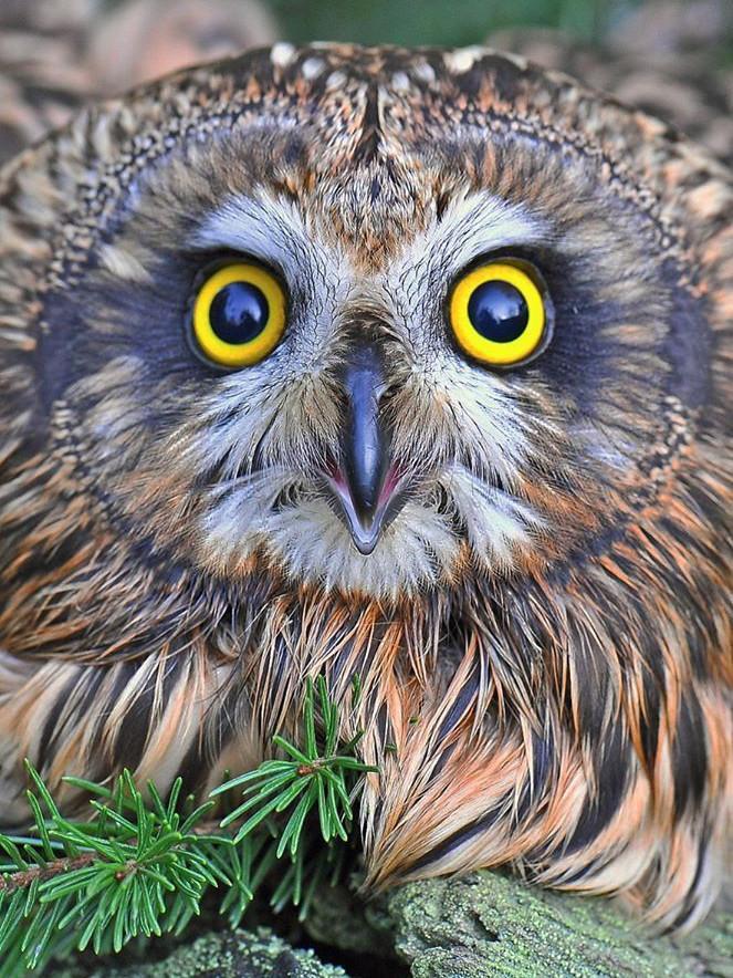 Алмазная мозаика Глазастая сова DM-348 30х40см Полная зашивка. Набор алмазной вышивки птицы