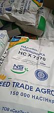 Купити ранньостиглий, тривалість соняшника НС Х 7634 Сербська селекція, євролайтинг, фото 2