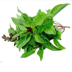 Пряні та зелені рослини