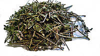 Мята перечная трава 100 грамм, Mentha piperita
