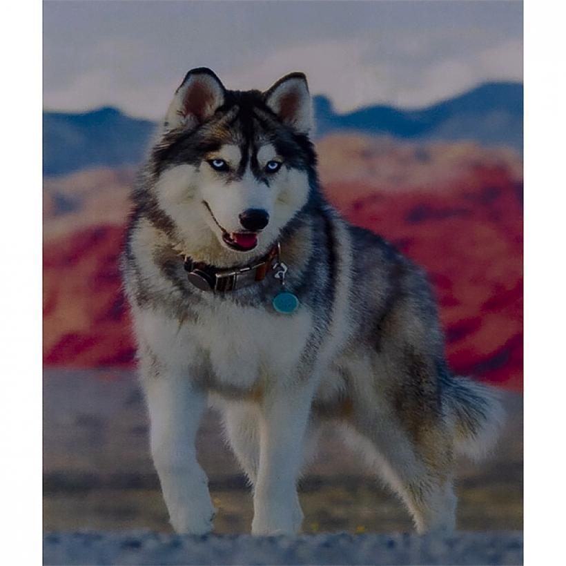 Алмазная  Живопись 40*50 GL73054 Волк
