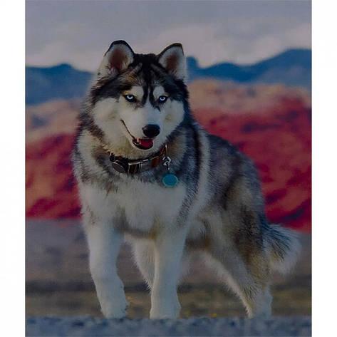 Алмазная  Живопись 40*50 GL73054 Волк, фото 2