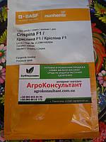 Семена огурца Криспина Ф1 1000 семян (Nunhems)— партенокарпик, ранний гибрид (38-40 дней)