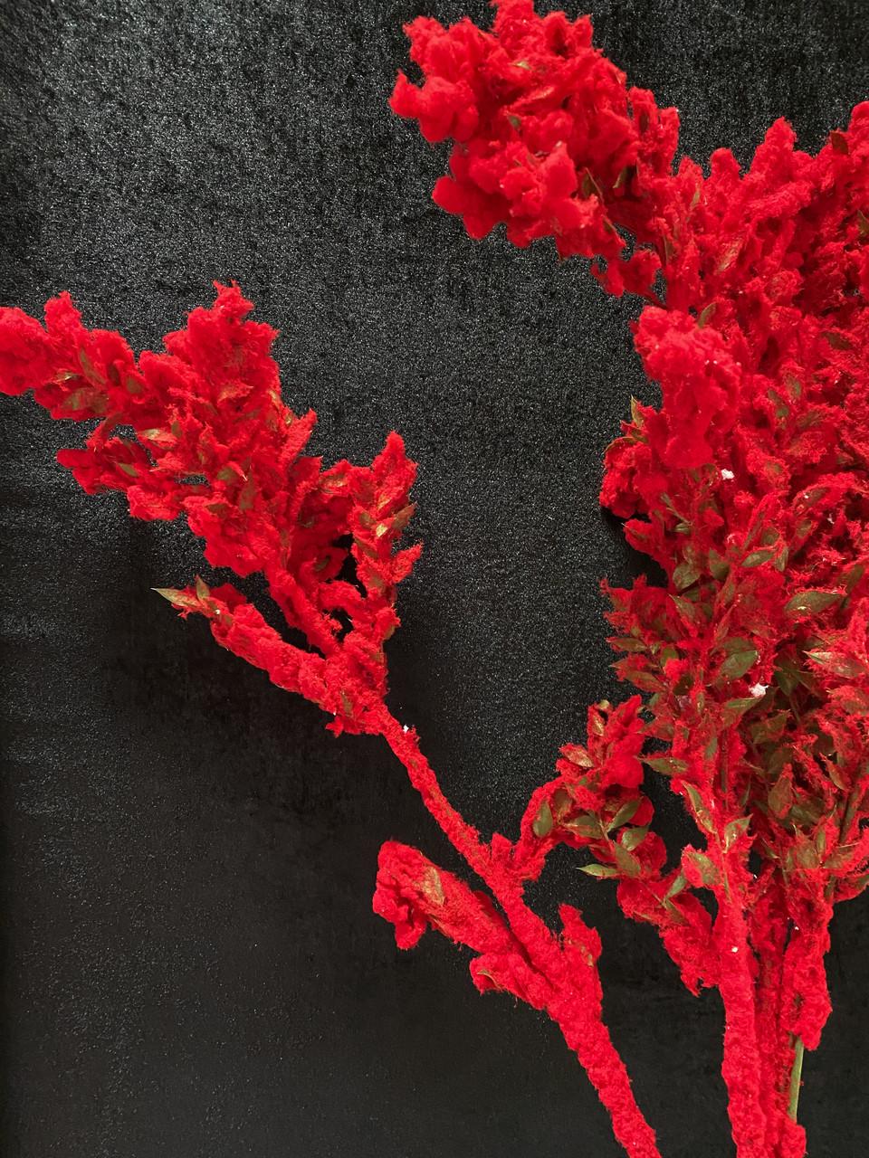 Сухоцвет заснеженный красный
