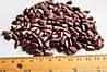 Семена подсолнечника гибрид - ЗЛАТСОН (Экстра фракция, Юрьева), фото 3