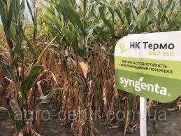 Семена кукурузы НК Термо, ФАО 330