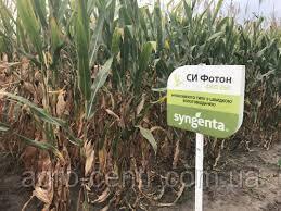 Семена кукурузы Си Фотон, ФАО 260