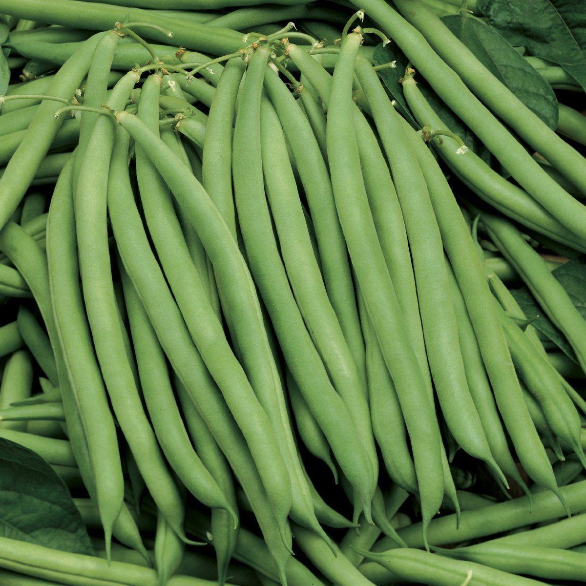 Семена фасоли Серенгети, 100 шт — ранняя (55 дней), спаржевая Syngenta