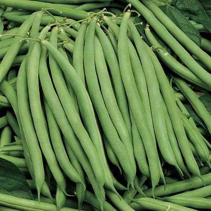 Семена фасоли Серенгети, 100 шт — ранняя (55 дней), спаржевая Syngenta, фото 2