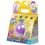 Little Live Pets S2 Інтерактивна іграшка Курча в яйці сюрприз 28427 Chick Single Pack, фото 6
