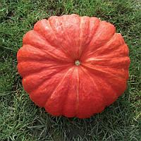 РУЖ ВИФ ДЕ ТАМП - семена тыквы, CLAUSE 100 грамм